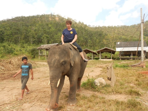 Jenny is 6 years old and though I was taught commands in Thai, she only listened to her young mahout, no matter how many bananas I gave her.