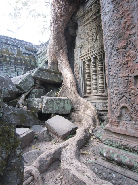 Ta Prohm.  The powers that be decided to leave renovate this temple around the trees that have grown around the rocks since 1186 when it was built.  We were there just after sunrise and I enjoyed the relative silence of stone, gods, trees and parrots calling from the treetops.  Remarkable.